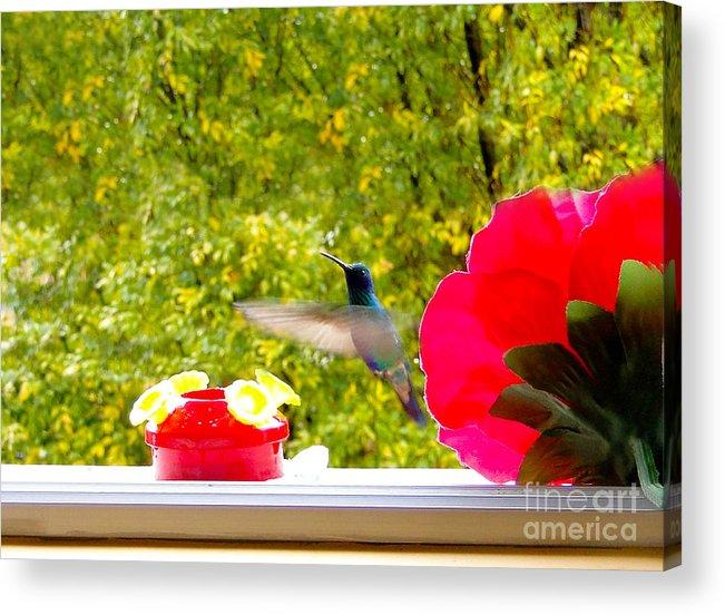 Al Bourassa Acrylic Print featuring the photograph Hummingbird In Cuenca Ecuador Vii by Al Bourassa