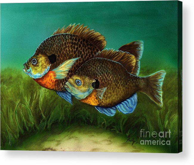 Bluegills Acrylic Print featuring the painting Pretty Little Panfish by Kathleen Kelly Thompson