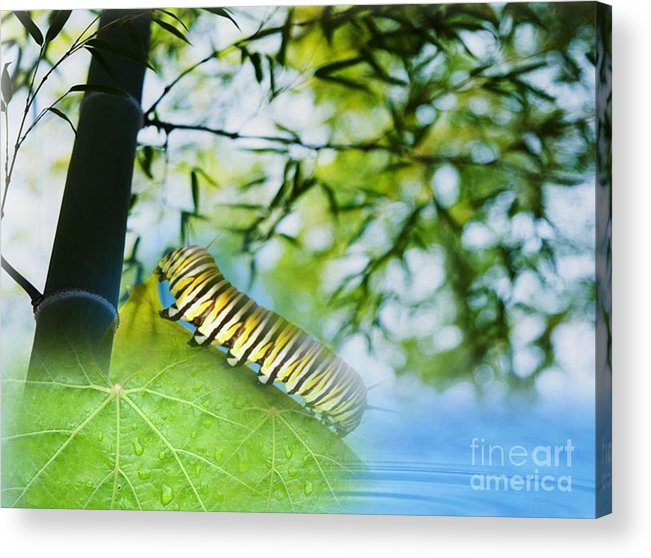 Water Acrylic Print featuring the digital art Rebirthing by Belinda Threeths