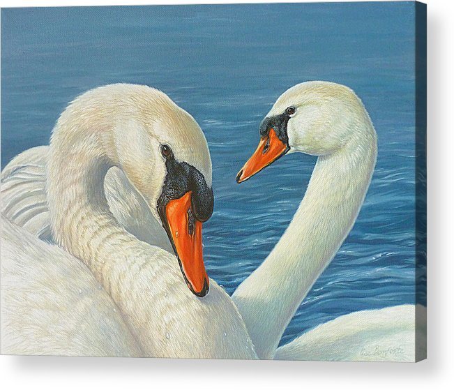 Swans Acrylic Print featuring the painting Swans In Love by Lisa Bonforte