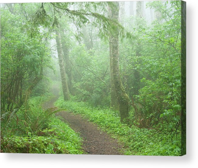 Trees Acrylic Print featuring the photograph Cape Perpetua Fog 0264 by Bob Neiman