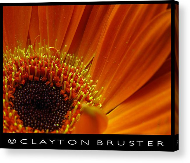 Clay Acrylic Print featuring the photograph Floral by Clayton Bruster