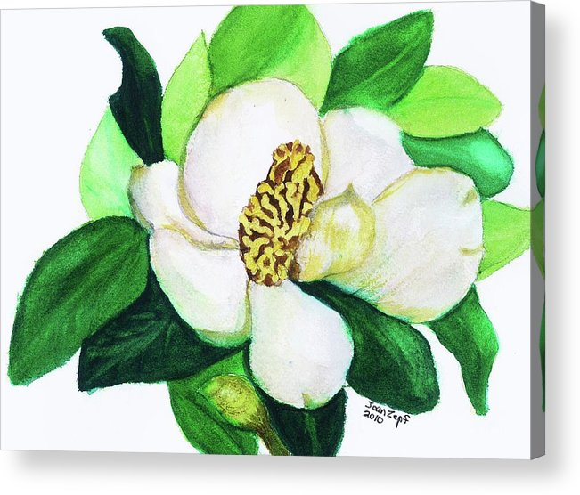 Magnolia Acrylic Print featuring the painting Magnolia Iv by Joan Zepf