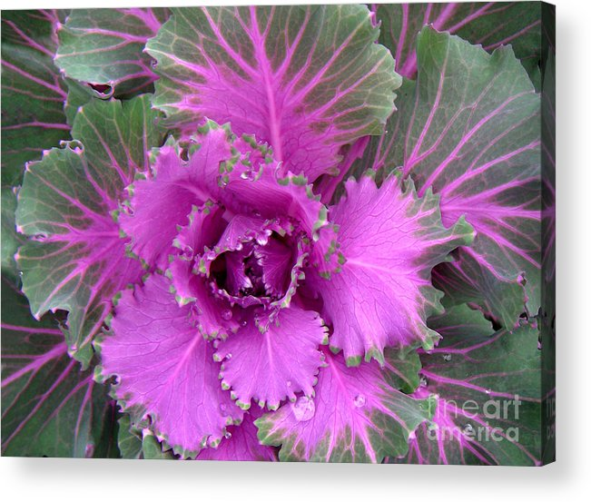 Nature Acrylic Print featuring the photograph A Study In The Shades Of Spring Four by Lucyna A M Green