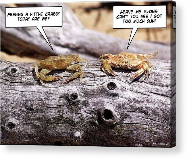 2d Acrylic Print featuring the photograph Crabby by Brian Wallace