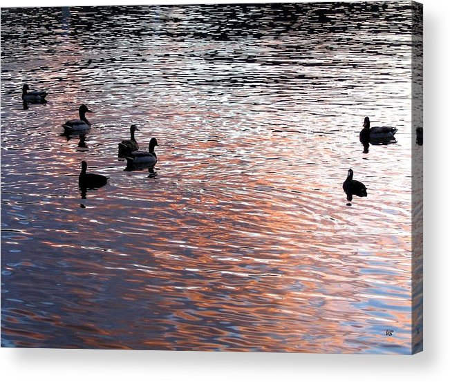 Ducks Acrylic Print featuring the photograph Evening Swim by Will Borden