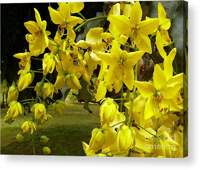 Yellow Shower Tree Acrylic Print featuring the photograph Golden Shower Tree by James Temple