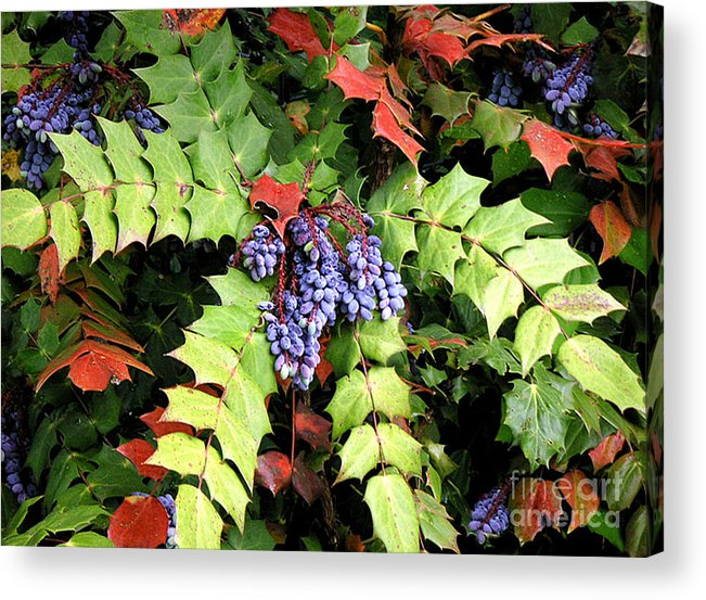 Nature Acrylic Print featuring the photograph Grapes With Leaves - Too by Lucyna A M Green