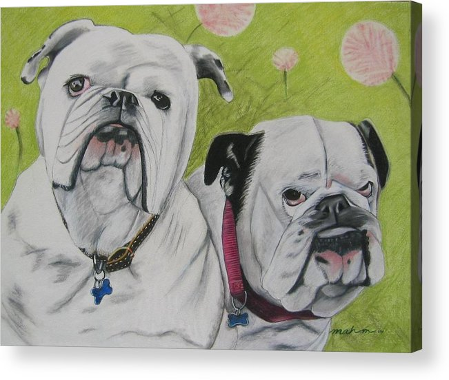 Dog Painting Acrylic Print featuring the pastel Gus And Olive by Michelle Hayden-Marsan