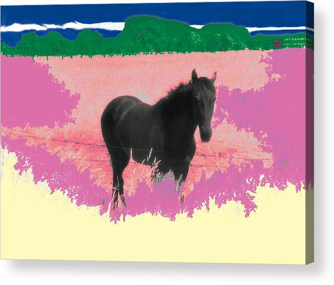 Horse Acrylic Print featuring the photograph Horse In A Dreamfield 7 by Lyle Crump