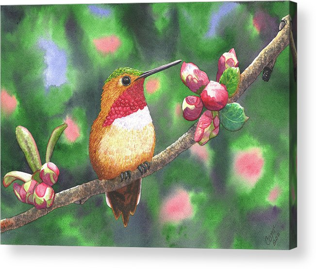 Hummingbird Acrylic Print featuring the painting Hummy by Catherine G McElroy