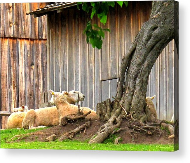Sheep Acrylic Print featuring the photograph Lawnmowers At Rest by Ian MacDonald