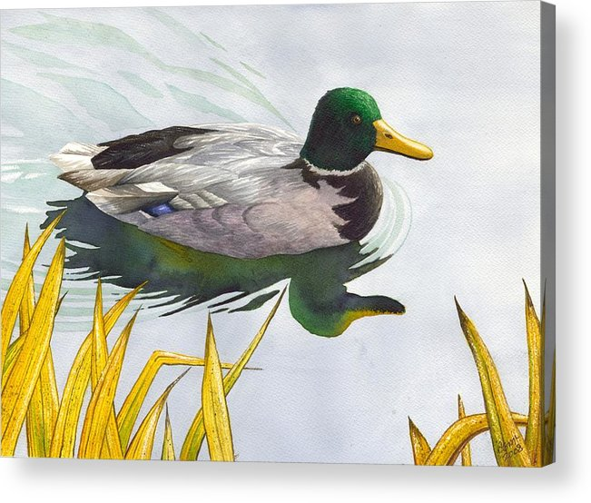 Duck Acrylic Print featuring the painting Mallard by Catherine G McElroy