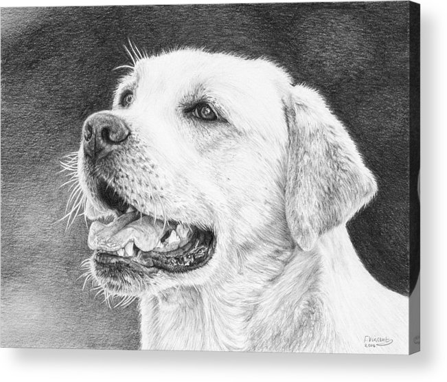 Dog Acrylic Print featuring the drawing Mans Best Friend by Frances Vincent