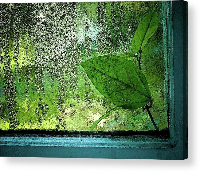 Rain Acrylic Print featuring the photograph Out My Window by Laura Regier