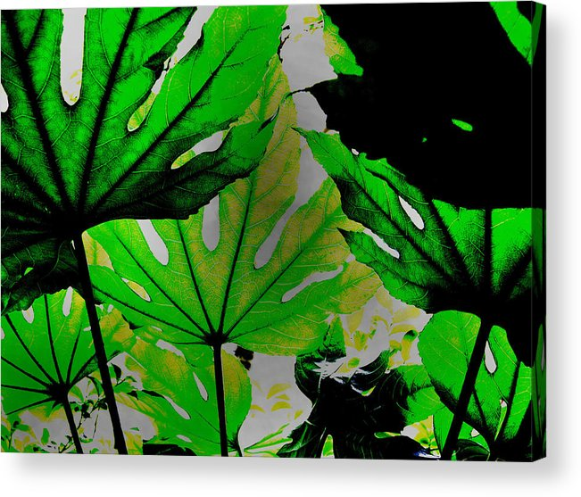 Palm Leaves Acrylic Print featuring the photograph Palm Leaves by Steven Corie