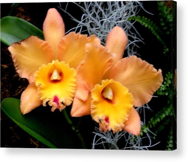 Flowers Acrylic Print featuring the photograph Peachy Couple by Jeanette Oberholtzer