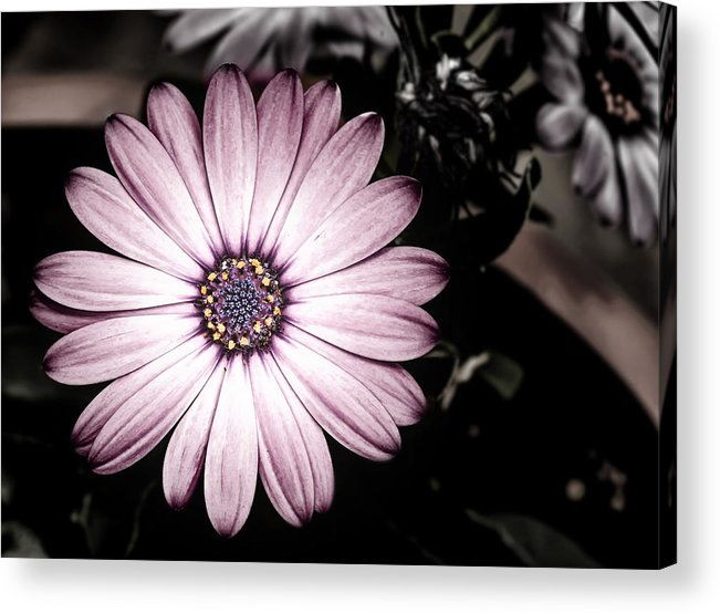 Flower Acrylic Print featuring the photograph Purple Flower by Al Mueller