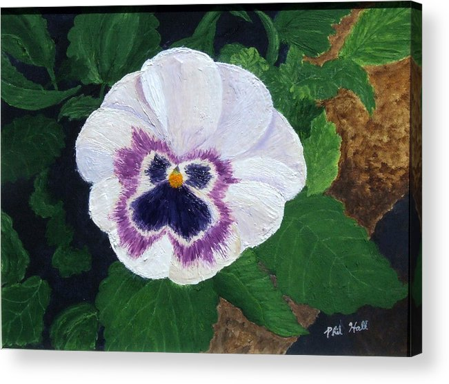 Purple Pansy Acrylic Print featuring the painting Purple Pansy by Philip Hall