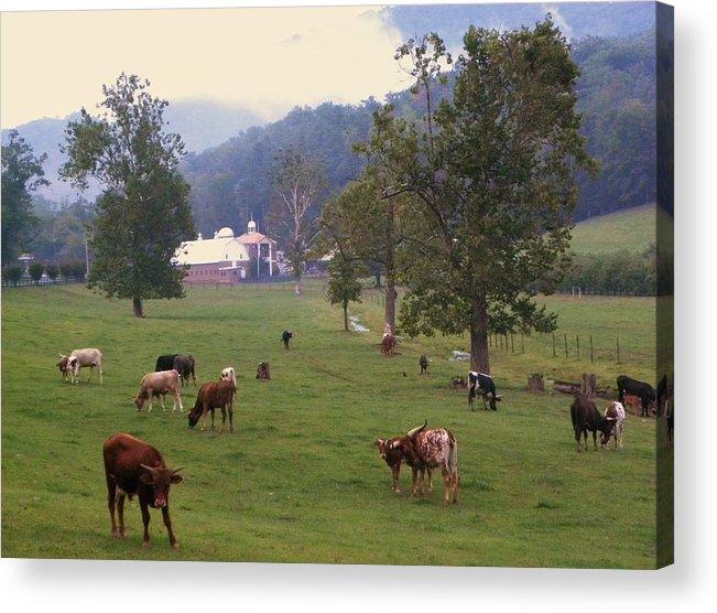 Cows Acrylic Print featuring the photograph Rainy Day Longhorns by Cindy Gacha