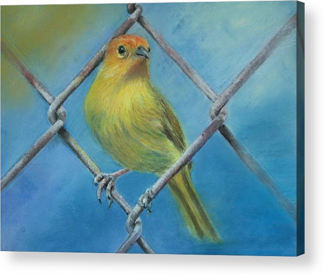 Bird Acrylic Print featuring the painting Safron Finch by Ceci Watson
