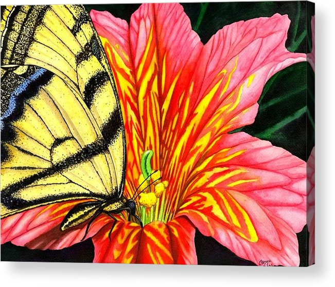 Salpiglossis Acrylic Print featuring the painting Salpliglossis by Catherine G McElroy