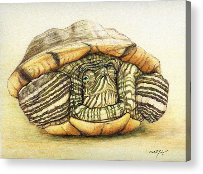 Turtle Acrylic Print featuring the painting Slow Retreat by Charlotte Yealey
