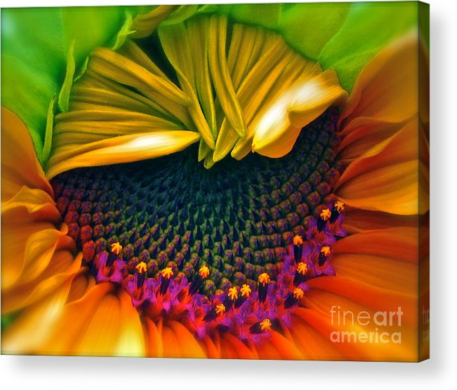 Sunflower Photograph Acrylic Print featuring the photograph Sunflower Smoothie by Gwyn Newcombe