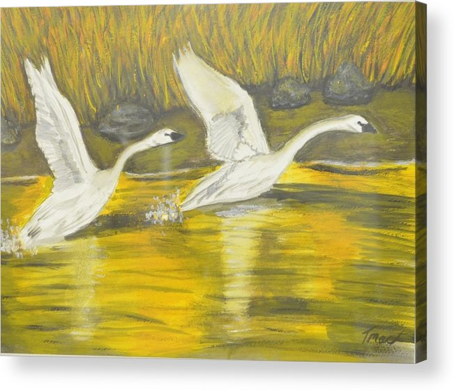 Swans Acrylic Print featuring the painting Swans In The Fall In Montana by Teresa French McCarthy