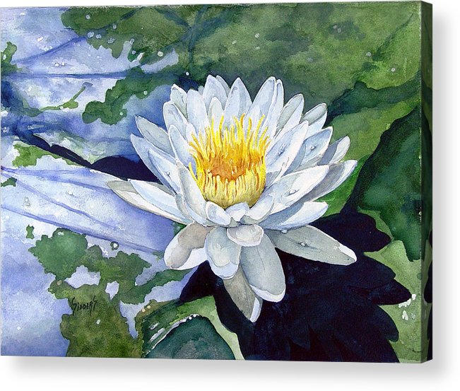 Flower Acrylic Print featuring the painting Water Lily by Sam Sidders