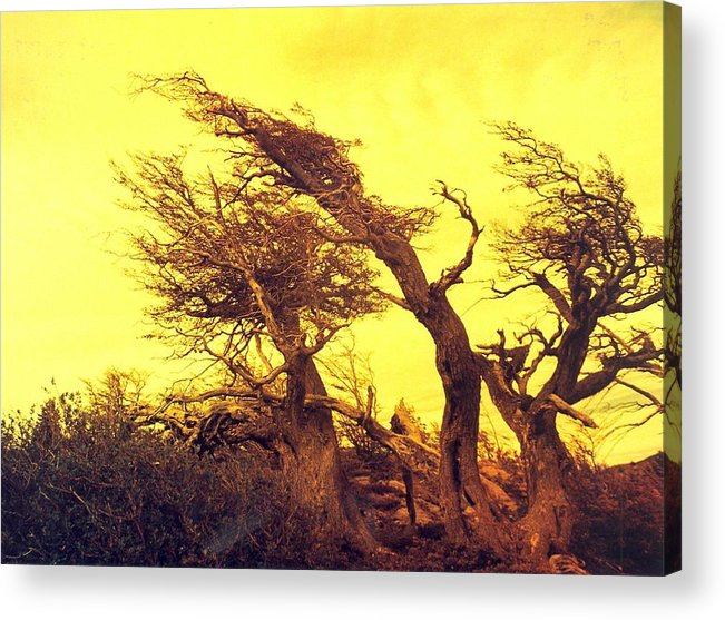 Trees Acrylic Print featuring the photograph Wicked Trees by Linda Russell