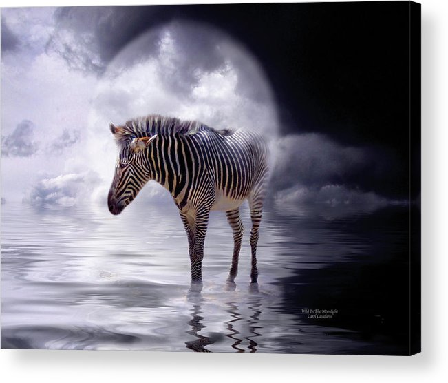 Zebra Acrylic Print featuring the mixed media Wild In The Moonlight by Carol Cavalaris