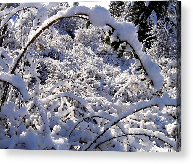 Snow Acrylic Print featuring the photograph Wild Rose Arch by Will Borden