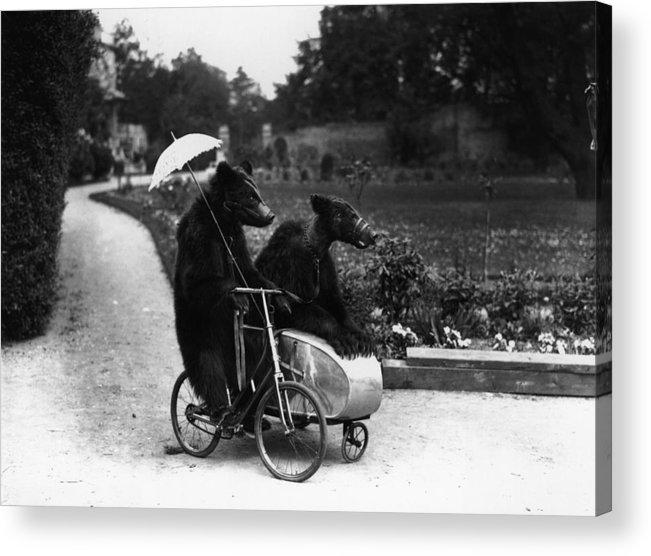 Bizarre Acrylic Print featuring the photograph Bear Ride by Fox Photos