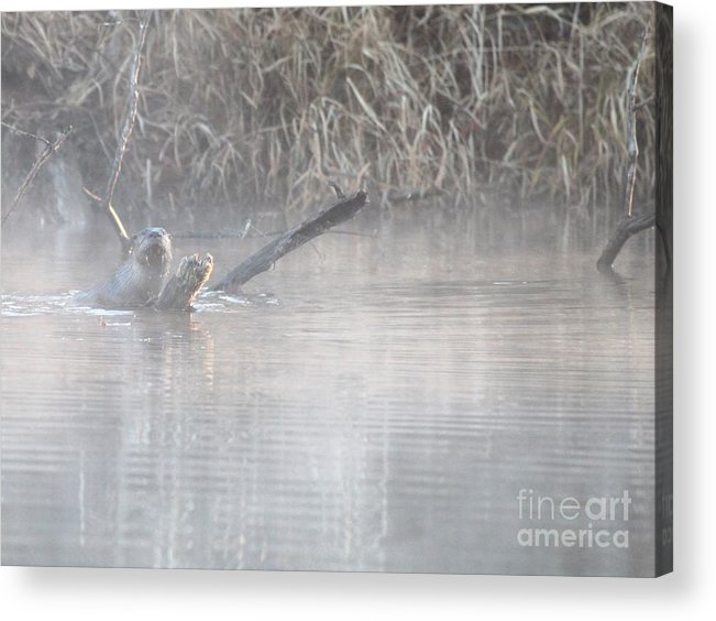 Nature Acrylic Print featuring the photograph Northern River Otter by Jack R Brock