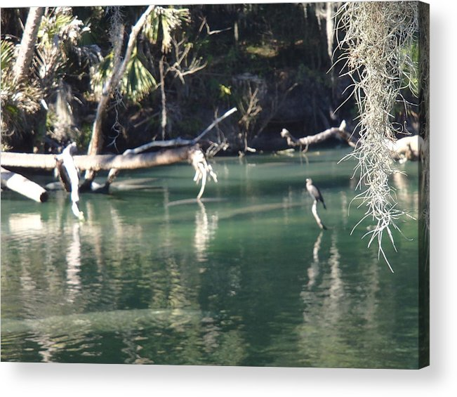 Landscape Acrylic Print featuring the photograph Peaceful River by Barbara Adkins