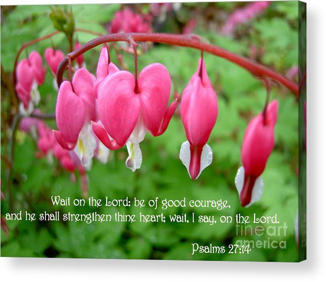 Flowers Acrylic Print featuring the photograph Psalms 27 14 Bleeding Hearts by Sara Raber