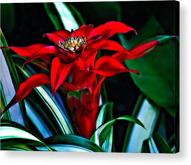 Red Acrylic Print featuring the photograph Sassy Girl by Steve Harrington
