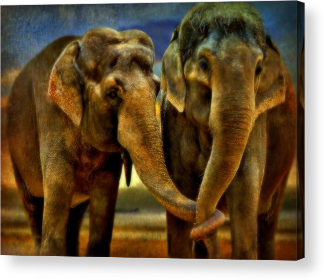 Elephants Acrylic Print featuring the mixed media So In Love by Wendie Busig-Kohn