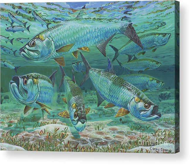 Tarpon Acrylic Print featuring the painting Tarpon Rolling In0025 by Carey Chen
