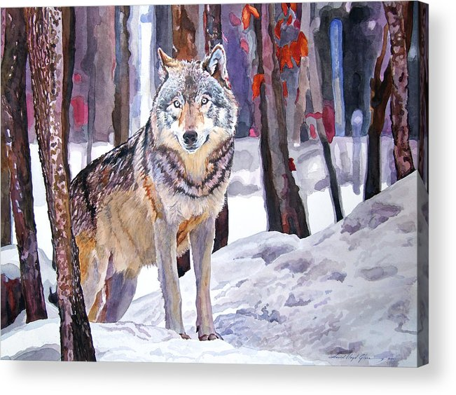 Wolf Acrylic Print featuring the painting The Lone Wolf by David Lloyd Glover