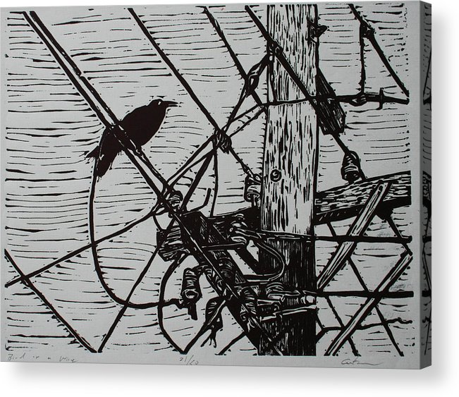 Bird Acrylic Print featuring the drawing Bird On A Wire by William Cauthern
