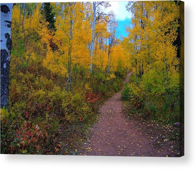 Acrylic Print featuring the photograph Autumn Trails by Shirlene Davis