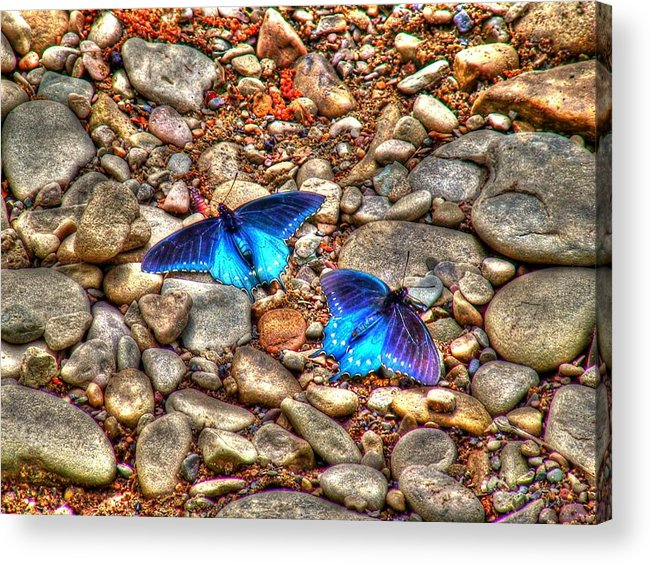 Butterflies Acrylic Print featuring the photograph Azul by Andrew Webb