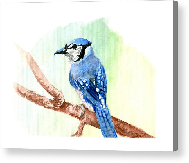 Blue Acrylic Print featuring the painting Blue Jay by Kyle Gray