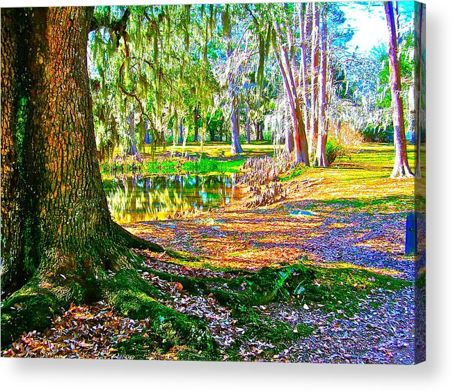 Tree Acrylic Print featuring the photograph Cool Feeling by Frank SantAgata