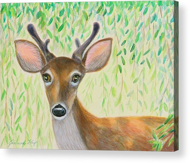 Deer Acrylic Print featuring the photograph Deer Visitor Under The Willow Tree by Jeanne Kay Juhos