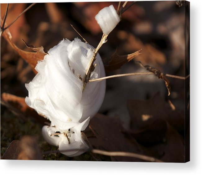 Frost Acrylic Print featuring the photograph Frost Flower 3 by Holst Photography