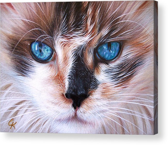 Cat Acrylic Print featuring the drawing Beautiful Mia by Elena Kolotusha