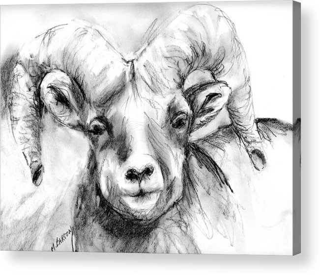 Big Horn Acrylic Print featuring the drawing Big Horn Sheep by Marilyn Barton